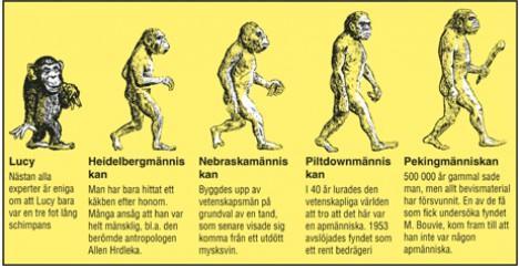 Nästan alla experter är eniga om att Lucy bara var en tre fot lång schimpans. Heidelbergmänniskan: Man har bara hittat ett käkben efter honom. Många ansåg att han var helt mänsklig, bland annat den berömda antropologen Allen Hrdleka. Nebraskamänniskan: Byggdes upp av vetenskapsmän på grundval av en tand, som senare visade sig komma från ett utdött mysksvin.  Piltdownmänniskan. I 40 år lurades den vetenskapliga världen att tro att det här var en apmänniska. 1953 avslöjades fyndet som ett rent bedrägeri. Pekingmänniskan 500 000 år gammal sade man, men allt bevismaterial har försvunnit. En av de få som fick undersöka fyndet, M. Bouvie, kom fram till att han inte var någon apmänniska