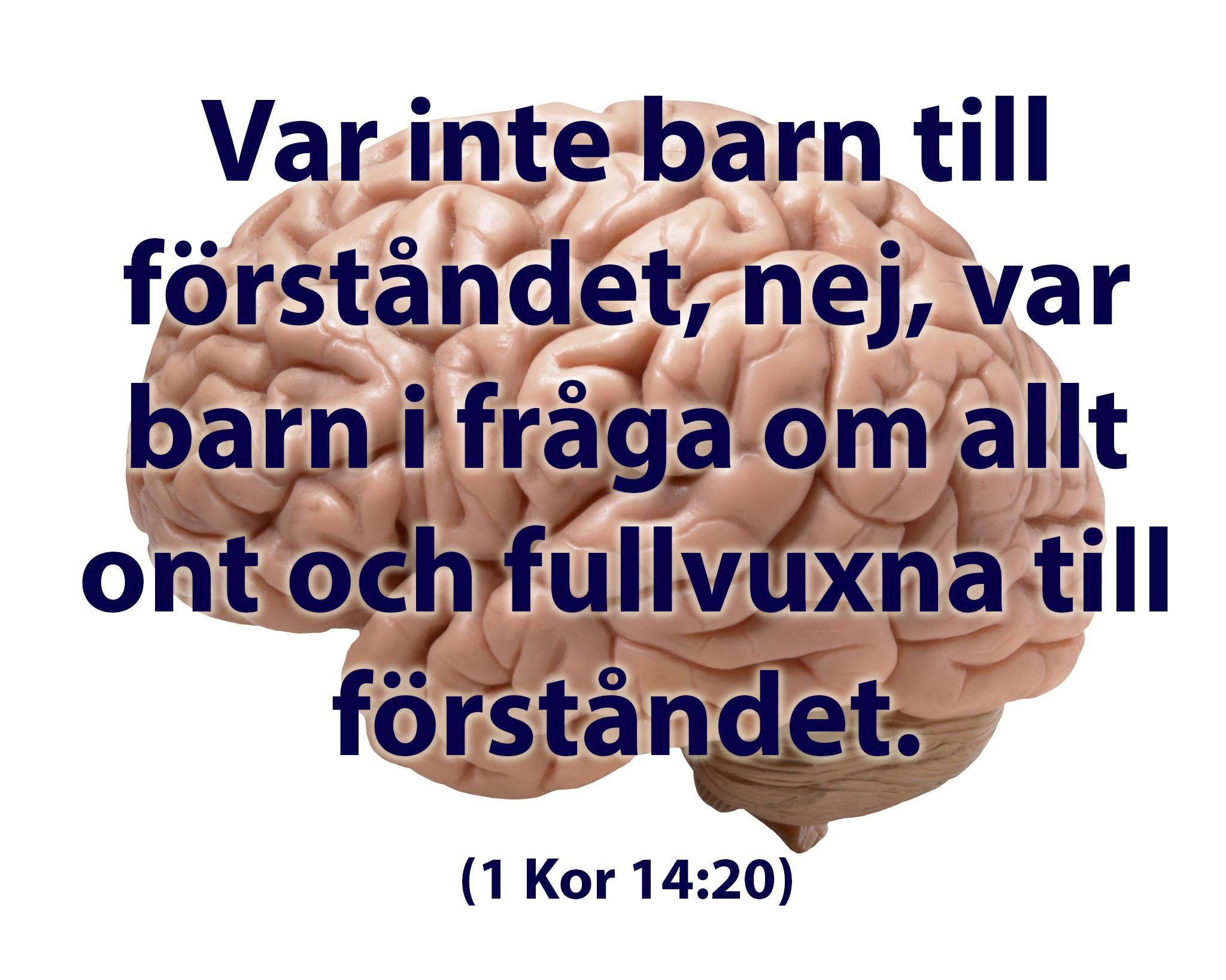Texten var inte barn till förståndet, nej, var barn i fråga om allt ont och fullvuxna till förståndet. (1 Kor 14:20) framför bilden av en hjärna.